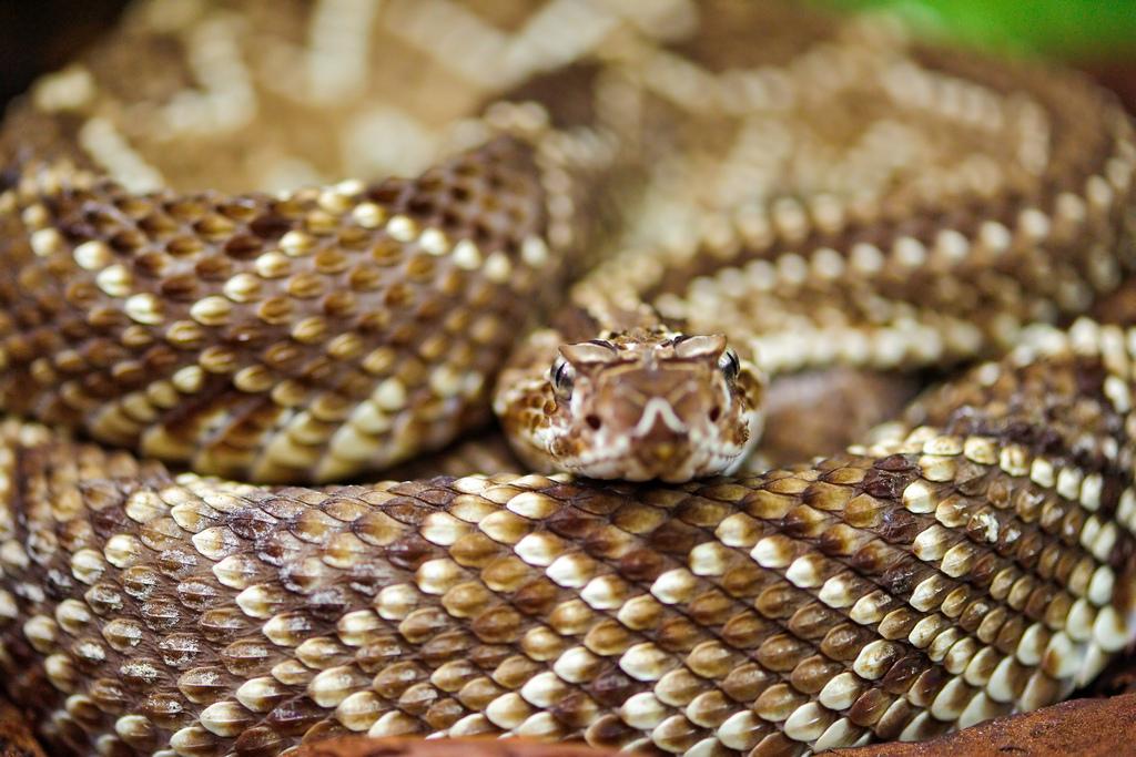 Snake Season Is Here
